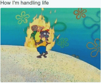 My life in a nutshell: How I'm handling life My life in a nutshell