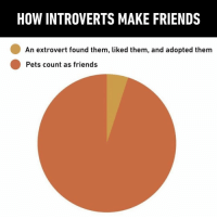 9gag, Friends, and Introvert: HOW INTROVERTS MAKE FRIENDS  An extrovert found them, liked them, and adopted them  Pets count as friends Adopt an introvert and you'll get a lovely pet as well⠀ pet friend introvert extrovert 9gag