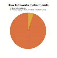 Dogs, Friends, and Memes: How Introverts make friends  Dogs count as friends  An extrovert found them, liked them, and adopted them @thebraintickle 10 out of 9 memers recommend this account 💯 @thebraintickle @thebraintickle