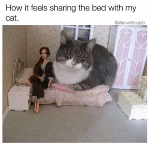 Memes, 🤖, and How: How it feels sharing the bed with my  cat.  @alienwithnojob