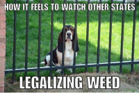 Jail, Memes, and Shit: HOW IT FEELS TO WATCH OTHER STATES  LEGALIZING WEED  nematic net Im over here In this jail happy state. Brothers here doing a year in prison for an ounce . Meanwhile mother fuckers walking into weed shops buying chocolate and gummi bears . Smoking in public and shit . I swear our government are the biggest criminals. These private prison owners will fight weed in Florida forever.