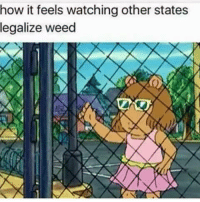 Memes, 🤖, and Weeds: how it feels watching other states  legalize weed