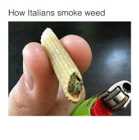 Follow @herb if u want more of these amazing memes: How Italians smoke weed Follow @herb if u want more of these amazing memes