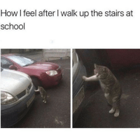 Memes, School, and True: How l feel after I walk up the stairs at  school So true😂