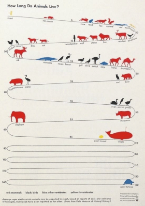 The average life span of animals.: How Long Do Animals Live?  insect  ret, mouse  hare toad  squirrel  10  cot  woodpecker l sheep lion  dog  20  crocodile raven herond  guli dove ostrich corp hone dromedary  30  owl bear  40  wan parrot goose  50  rhinoceros  elephant  60  65  pearl mussel  70  80  90  100  110  120  130  140  150  giant tortoise  red mammals black: birds blue: other vertebrates yellow: invertebrates  Prepared for Compion  Picured Encyelopedio  Average ages which certain animals may be expected to reach, based on reports of zoos and estimates  of biologists Individuols have boen reported as far older. (Data from Field Museum of Natural History. The average life span of animals.
