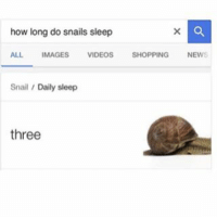 Shopping, Videos, and Images: how long do snails sleep  ALL IMAGES VIDEOS  SHOPPING  NEW  Snail  Daily sleep  three 3 too