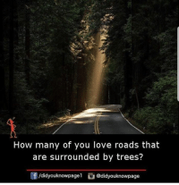 Love, Memes, and Trees: How many of you love roads that  are surrounded by trees?  f/didyouknowpagel @didyouknowpage