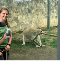 World Wrestling Entertainment, Lion, and San Antonio: How many WWE wrestlers does it take to win in tug-of-war with a 2 year old lion cub? 😱  Credit:  San Antonio Zoo