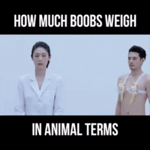 How much boobs weigh in animal terms: HOW MUCH BOOBS WEIGH  IN ANIMAL TERMS How much boobs weigh in animal terms