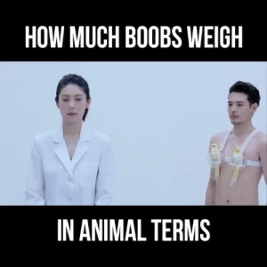 Such burden Respect ++ via /r/funny https://ift.tt/2N66Osj: HOW MUCH BOOBS WEIGH  IN ANIMAL TERMS Such burden Respect ++ via /r/funny https://ift.tt/2N66Osj