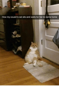 Cats, Grumpy Cat, and Home: How my cousin's cat sits and waits for her to come home