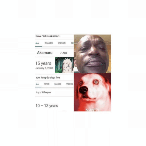 Crying, Dogs, and Memes: How old is akamaru  ALL IMAGES VIDEOS NE  Akamaru Age  15 years  January 6, 2003  how long do dogs live  ALL NEWS IMAGES VIDEOS  Dog / Lifespan  10- 13 years man im crying 🤧