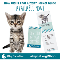 """How Old Is That Kitten? Pocket Guide  AVAILABLE NOW  FOUR WEEKS  HOW OLD  grams,  440-470 Weight 15.5-16.6 ounces  and  Teeth: incisors in  Eyes: Blue  KITTEN?  Tal up  feet  food  Steady on solid to eat Begins Alleycat Allies  care information:  For alley  Alley Cat Allies  alleycat.org/Shop Ears folded and eyes closed? Or playful and eating solid food? These clues will help you identify a kitten's age with our """"How Old Is That Kitten"""" Pocket Guide!   Kitten season means you may find kittens around outdoors. Our pocket guide will help you determine their age and then direct you to the right webpage for specific care guidelines. Adapted from our popular Kitten Progression poster, this portable field guide will help you care for any kittens you find!   Get your own here: http://bit.ly/2ob8MyJ"""