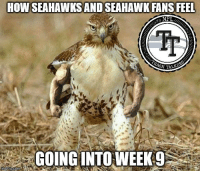 Getting ready to hopefully make a run this year Just need a Running game!!  #Lob360: HOW SEAHAWKSAND SEAHAWK FANS FEEL  Tr  GOING INTO WEEK9 Getting ready to hopefully make a run this year Just need a Running game!!  #Lob360