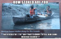 "Study long, study wrong: HOW STOKED ARE YOU  Mexican beaver studies along the Rio Grande  EsONiA SCALEOF 1TTOi GUY THATABOUT TOSEE HIM SOME  MEXICAN BEAVER""  made on imgur Study long, study wrong"