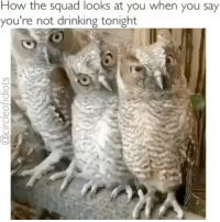 Drinking, Squad, and Girl Memes: How the squad looks at you when you say  you're not drinking tonight Don't you even dare say you're tired rn Debbie @circleofidiots