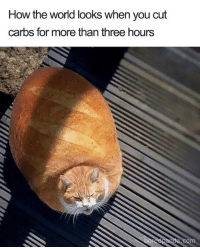 How, Three, and You: How the worid looks When you cut  carbs for more than three hours
