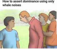 "<p>I think i see potential 1 via /r/MemeEconomy <a href=""http://ift.tt/2DqdkFM"">http://ift.tt/2DqdkFM</a></p>: How  to assert  dominance  using  only  whale noises <p>I think i see potential 1 via /r/MemeEconomy <a href=""http://ift.tt/2DqdkFM"">http://ift.tt/2DqdkFM</a></p>"