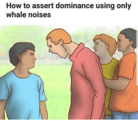 "<p>Works 9 out of 11 times via /r/memes <a href=""http://ift.tt/2kVQHlT"">http://ift.tt/2kVQHlT</a></p>: How to assert dominance using only  whale noises <p>Works 9 out of 11 times via /r/memes <a href=""http://ift.tt/2kVQHlT"">http://ift.tt/2kVQHlT</a></p>"