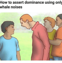 Assert Dominance: How  to assert dominance using only  whale noises