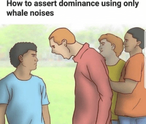 Dont know why I laughed at this too much via /r/memes https://ift.tt/2JFk5Kh: How to assert dominance using only  whale noises Dont know why I laughed at this too much via /r/memes https://ift.tt/2JFk5Kh