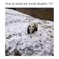 Memes, Mondays, and How To: How to avoid any social situation 101 Someone had a case of the Mondays | @cuteandfuzzybunch 👈