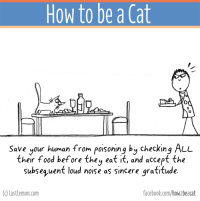Books, Facebook, and Finals: How to be a Cat  Save your human from poisoning by checking ALL  their food before the  eat it, and accept the  subsequent loud noise as sincere gratitude.  (c) lastlemon.com  facebook.com/how beacat The BOOK of this page is finally out! It can be ordered here http://lastlemon.com/cats/the-book/