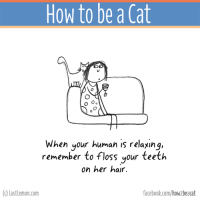 The BOOK of this page is finally out! It can be ordered here http://lastlemon.com/cats/the-book/: How to be a Cat  When your human is relaxing,  remember to floss your teeth  on her hair.  lastlemon.com  facebook.com/how beacat The BOOK of this page is finally out! It can be ordered here http://lastlemon.com/cats/the-book/