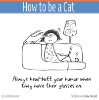 Butt, Memes, and Glasses: How to be a Cat  X X  Always head-butt our human when  they have their glasses on  (c) last lemon com  facebook.com/how beacat The BOOK of this page is finally out! It can be ordered here http://lastlemon.com/cats/the-book/