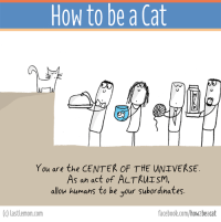 Books, Cats, and Facebook: How to be a Cat  You are the CENTER OF THE UNIVERSE.  As an act of ALTRUISM,  allow humans to be your subordinates.  lastlemon.com  facebook.com/hoW2beacat The BOOK of this page is finally out! It can be ordered here http://lastlemon.com/cats/the-book/