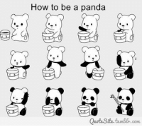 Memes, 🤖, and Pandas: How to be a panda  Quote Site tumble.com