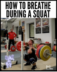 Gym, Memes, and Pressure: HOW TO BREATHE  DURING A SQUAT  TIGHTLI ARE YOU BREATHING CORRECTLY DURING YOUR SQUATS?!? (Find out how to do it the right way!) . Step 1) Take a huge breath 🗣 Step 2) Brace your core like you're about to take a punch to the gut👊🏻 Step 3) Start your squat 🏋🏽 Step 4) Control a forceful exhale through a closed mouth (valsalva maneuver).😤 . If you let your breath out completely, you will instantly lose stability. This transfers harmful pressures onto the small vulnerable structures of the spine (intervertebral discs and ligaments). This is like letting the air out of a balloon too fast. As the air leaves the balloon it becomes less stable. The same goes for our body. However if we only let a small amount of air escape the balloon by maintaining our squeeze on the opening, the balloon 🎈 stays stable for longer . For some this will sound like an elephant 🐘 (@max_lang_weightlifting is our example today). The breath should never be held for more than a few seconds during the squat. Doing so can dramatically increase blood pressure and cause black-outs and other cardiovascular injury for those at risk. While the valsalva maneuver (even when held for short periods) has been shown to cause an increase in systolic blood pressure, it is very safe for healthy athletes. For most this temporary rise in blood pressure is not harmful. That being said, it should be used with caution with older individuals and anyone with a history of heart disease. . Breathing correctly with big weight will allow you to lift bigger weight safely! ✅ ___________________________________ Squat University is the ultimate guide to realizing the strength to which the body is capable of. The information within these pages are provided to empower you to become a master of your physical body. Through these teachings you will find what is required in order to rid yourself of pain, decrease risk for injury, and improve your strength and athletic performance. __________________________________ Squat SquatUniversity Powerlifting weightlifting crossfit training wod workout gym fit fitfam fitness fitspo oly olympicweightlifting hookgrip mobility USAW physicaltherapy lifting crossfitter motivation