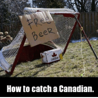 Hockey, How To, and Canadian: How to catch a Canadian. -winch
