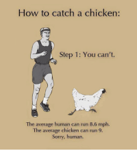 """Run, Sorry, and Target: How to catch a chicken:  Step 1: You can't.  The average human can run 8.6 mph.  The average chicken can run 9.  Sorry, human. <p><a href=""""http://laurasspatula.tumblr.com/post/115348379370/pleatedjeans-via"""" class=""""tumblr_blog"""" target=""""_blank"""">laurasspatula</a>:</p><blockquote><p><a href=""""http://stream.pleated-jeans.com/post/115224156511/via"""" class=""""tumblr_blog"""" target=""""_blank"""">pleatedjeans</a>:</p><blockquote><p><a href=""""http://themetapicture.com/heres-how-to-catch-a-chicken/"""" target=""""_blank"""">via</a></p></blockquote><figure data-orig-width=""""750"""" data-orig-height=""""421"""" class=""""tmblr-full""""><img src=""""https://78.media.tumblr.com/5cb18fe2304a2c53b477bddb5e01d0e7/tumblr_inline_nm7k8c3dFO1rpczgn_540.jpg"""" alt=""""image"""" data-orig-width=""""750"""" data-orig-height=""""421""""/></figure></blockquote>"""