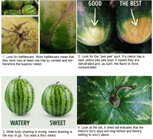 How to choose the absolute best watermelon: How to choose the absolute best watermelon