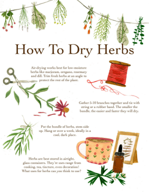 madisonsaferillustration: A how to for drying herbs. There are tons of methods, as everything in herbalism. This one works well for me!: How To Drv Herbs  Air-drving works best for low-moisture  herbs like marjoram, oregano, rosemary  and dill. Trim fresh herbs at an angle to  protect the rest of the plant.  Gather 5-10 branches together and tie with  string or a rubber band. The smaller the  bundle, the easier and faster they will dry  Put the bundle of herbs, stem-side  up. Hang or over a week, ideally in a  cool, dark place  Herbs are best stored in airtight,  glass containers. They're uses range from  cooking, tea, tincture, even decoration!  What uses for herbs can you think to use? madisonsaferillustration: A how to for drying herbs. There are tons of methods, as everything in herbalism. This one works well for me!
