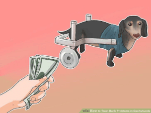 How to earn quick cash from your paraplegic dog while quarantined: How to earn quick cash from your paraplegic dog while quarantined