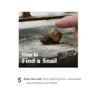 A Dream, Dad, and Family: How to  Find a Snail  Enjoy the snail. Enjoy watching them crawl around,  the possibilities are endless. the snail reminded me of when i was a kid i had a dream that my whole family was like the incredibles and we all had superpowers and my mum could go invisible and called herself the invisible woman, and my dad was incredibly strong so he called himself the hulk and my brother was really fast so he was obviously the flash (i don't know why i mixed dc and marvel together but idk) and what not so they always barged into fights looking all badass and stuff but then,,, my superpower was being slow??? everything i did took 3x longer than the average person??? they called me turtlegirl??? what