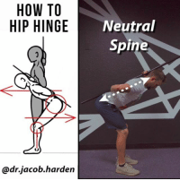Flexing, Memes, and Work: HOW TO  HIP HINGE  Neutral  Spine  @dr.jacob.harden IT'S ALL IN THE HIPS The hip hinge is a fundamental movement that all humans should know how to do. In day to day movement, the hinge helps you move safely and efficiently and distribute stress between the back and hips. It also is a great way for people with low back pain to move pain free.😃 . Why you should hinge comes down to simply having options. . There is nothing wrong with spinal flexion. It is a natural movement that we should be able to do. But just as we should be able to move with flexion, we should also be able to move without it. 🗝 The more variability we have, the more options we have in our movement. . If you can't hinge, you have no choice but to flex through your spine. And while that's fine to tie your 👟shoes, it may not be the best way to move your couch or pick up a heavy deadlift, especially if you haven't trained loaded flexion. You need to know how to organize yourself and move efficiently when placed in higher stress situations so that you reduce your injury risk.🏋️‍♂️ . So if you need to work on your hinge, this is one of my favorite progressions. The key is to load into the hips and keep a neutral spine. It takes time to build this coordination so don't get frustrated if it doesn't come naturally at first. Keep practicing and you'll get it.✌❤ . Tag a friend who needs to move better and share the wealth! . 🎵 - Roman Louder - Cue 1 MyodetoxOrlando Myodetox