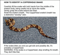 """🤣🤣: HOW TO IDENTIFY A COPPERHEAD SNAKE  Carefully lift the snake with both hands from the middle of the  snake's body, being careful not to injure the reptile  Gently grasp the snake behind the head.  Smell the snake's breath. The Copperhead snake's breath has  a distinctive """"woodsy"""" odor.  If the snake bites you and you get sick and possibly die, it's  probably a Copperhead.  WARNING: If the snake is a Copperhead, stop smelling it's breath  They don't like that 🤣🤣"""