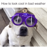 Via @viralthreadofficial More inventions 👉 @inventastic invention: How to look cool in bad weather  Wipers Via @viralthreadofficial More inventions 👉 @inventastic invention