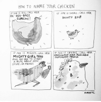 Hello, Memes, and Supreme: HOW TO NAME YOUR CHICKEN  IF SHE IS BIG, CALL HER.  F SHE SMALL I CALL HER  OL' HEN BAGS  DAINTY BAB  SUPREME  IF SHE  IS MIGHT y, CALL HER  IF SHE IS CALL HER  EMOTIONALLY OVER AVAILABLE  L 9000  FEATHERED AND GET HER TO START  A BLO4 ABOUT HEN  STUFF, OR MEMES Hello this is a guide on how to name your chicken. I haven't put a bra on in 2 days and I burnt my finger on a light bulb during this upload