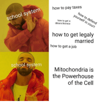 School, Taxes, and How To: how to pay taxes  how to defend  yourself in court  school system  how to get a  drivers licence  how to get legaly  married  how to get a job  Mitochondria is  the Powerhouse  of the Cell  school system GuYs I jUsT lEaRnEd ThAt MiToChOnDrIa Is ThE pOwErHoUsE oF tHe CeLl