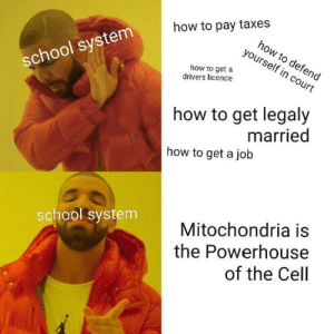 All i ever learned: how to pay taxes  how to defend  yourself in court  school system  how to get a  drivers licence  how to get legaly  married  how to get a job  Mitochondria is  the Powerhouse  of the Cell  school system All i ever learned