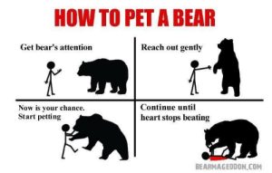 Dank, Memes, and Target: HOW TO PET A BEAR  Get bear's attention  Reach out gently  Now is your chance.  Start petting  Continue until  heart stops beating  BEARMAGEDDON COM Very interesting by Austinrains502 MORE MEMES
