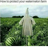 That's a quality meme ~ Cuba dankmemes cringe meme memes wow idubbz lmao lol harambe funny kek spook doyouremember filthyfrank fnaf ayylmao weeaboo anime vaporwave wtf L realniggahours sp00k furrys papafranku edgy mlg 420 keemstar fallout: How to protect your watermelon farm That's a quality meme ~ Cuba dankmemes cringe meme memes wow idubbz lmao lol harambe funny kek spook doyouremember filthyfrank fnaf ayylmao weeaboo anime vaporwave wtf L realniggahours sp00k furrys papafranku edgy mlg 420 keemstar fallout