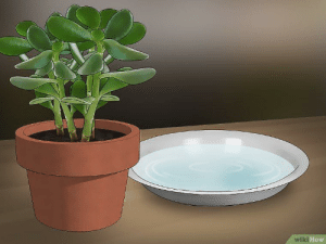 How to psychology torture your houseplant: How to psychology torture your houseplant