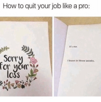 Memes, Sorry, and How To: How to quit your job like a pro:  It's me.  08  Sorry  l leave in three weeks.  ror your  oss This is great! 😂