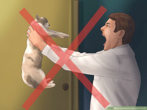 """How to Renact that Scene in Rush Hour Where Chris Tucker Screams """"Do You Understand the Words That Are Comin' Outta My Mouth?"""" with Your Cat: How to Reduce Stress i How to Renact that Scene in Rush Hour Where Chris Tucker Screams """"Do You Understand the Words That Are Comin' Outta My Mouth?"""" with Your Cat"""