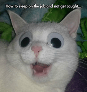 Meme, Tumblr, and Blog: How to sleep on the job and not get caught... daily-meme:  Perhaps The Secret Is In The Smile.